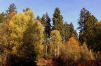 -Herbstlicher Solling-