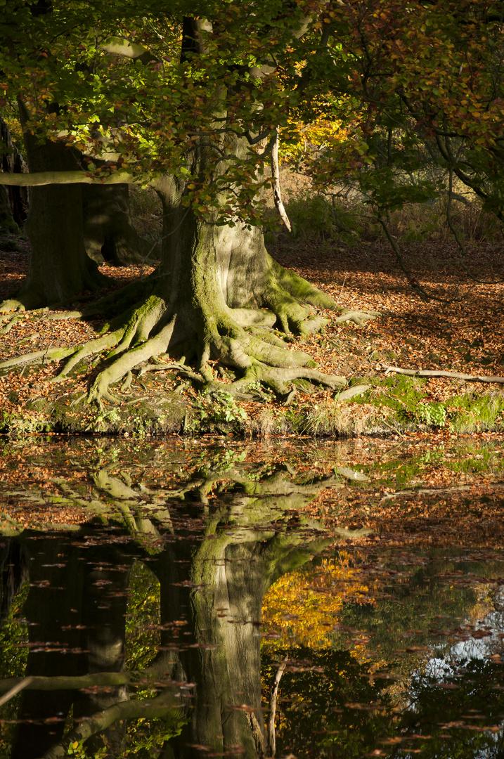 Herbstlicher Spiegel