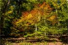 Herbstlicher Traumpfad ...