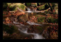 Herbstlicher Twannbach