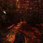 """"""" Herbstlicher Wald """""""