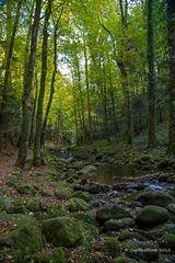 Herbstlicher Wald mit Bach