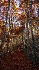 """"""" Herbstlicher Wald *  Serien - Ende """""""