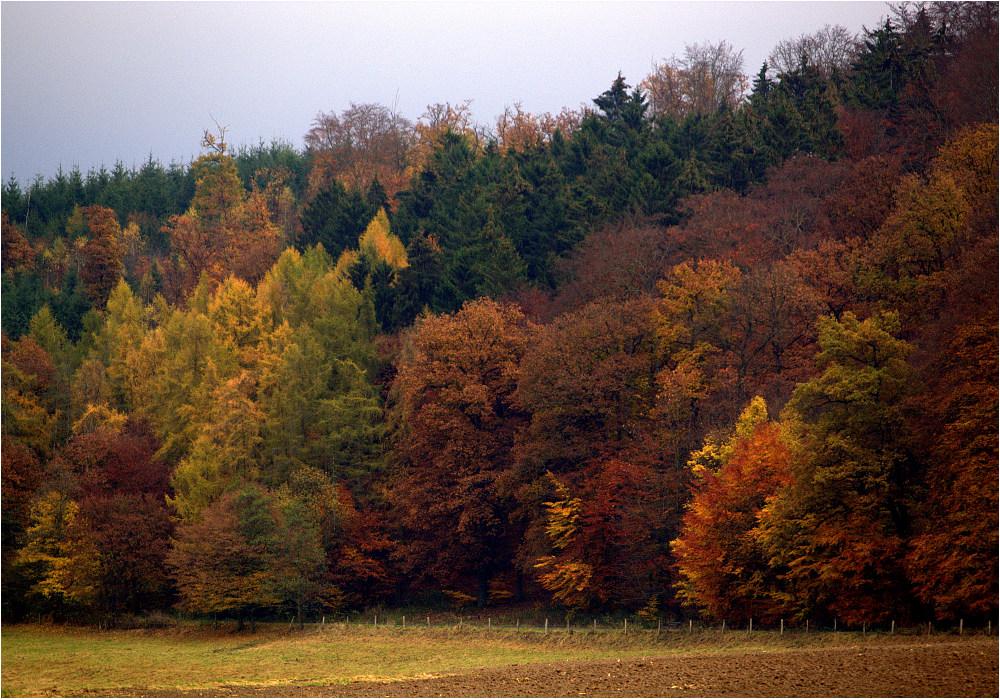 Herbstlicher Waldrand ...