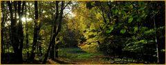 Herbstlicher Waldspazierweg