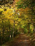 Herbstlicher Waldweg am Rursee