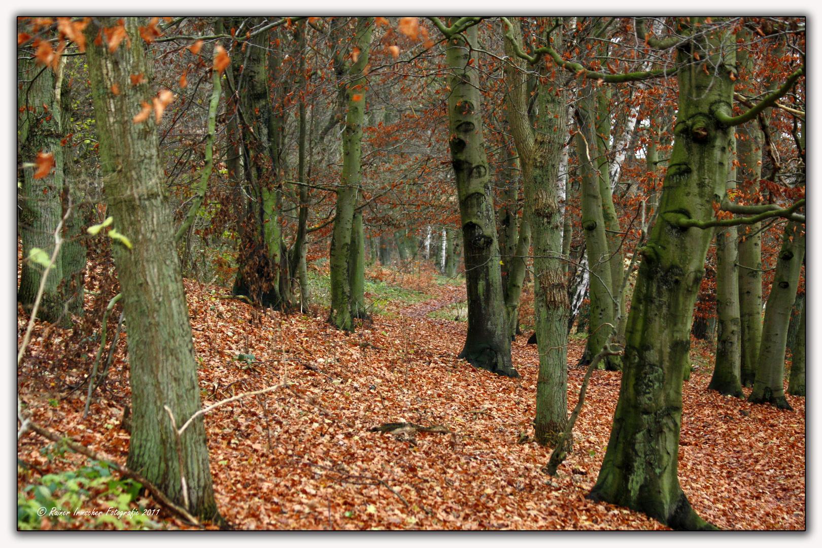 Herbstlicher Wanderweg...