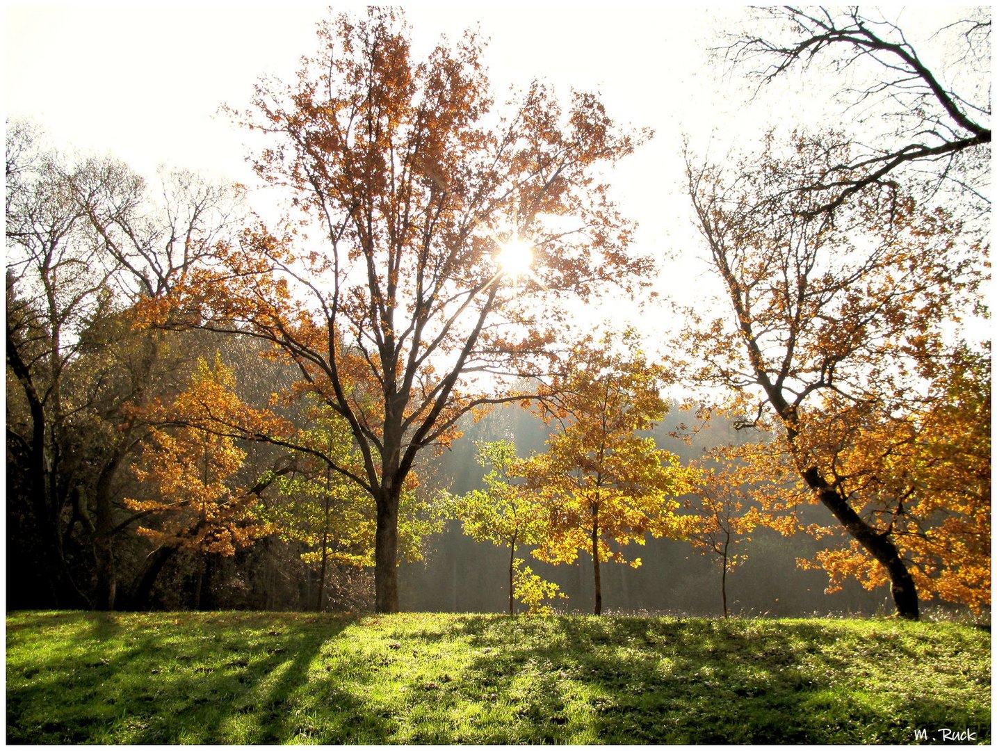 Herbstliches 146.