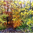 Herbstliches 166.