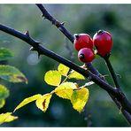 Herbstliches 3.......