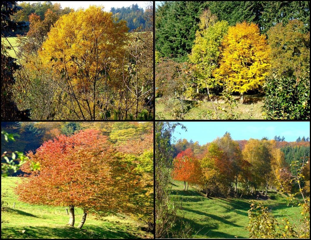 Herbstliches -