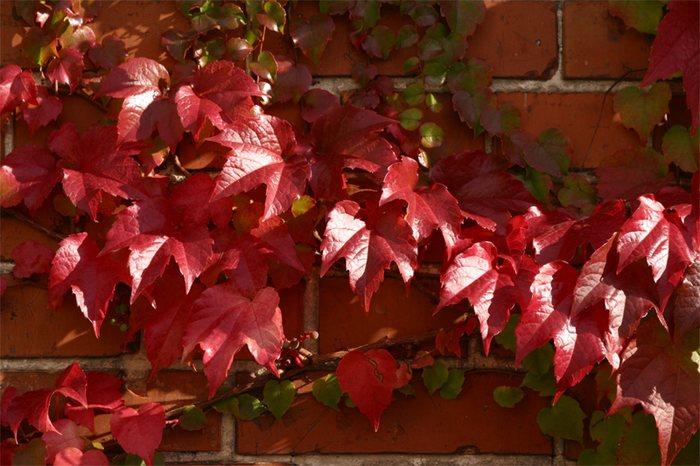 Herbstliches an einem goldenen Oktobertag