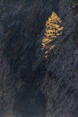 Herbstliches aus den Bergen...
