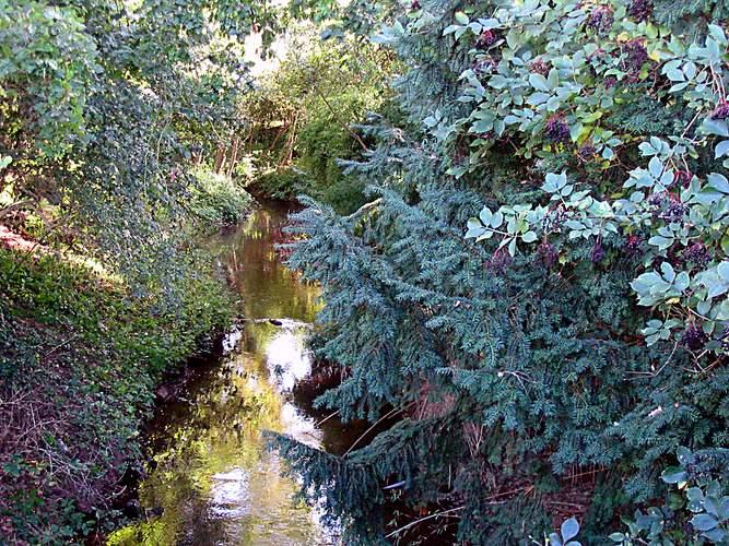 Herbstliches Bachidyll