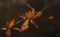 Herbstliches Eichenblatt