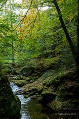 Herbstliches Erlebnis Wald mit Bach