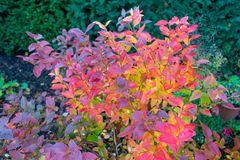 Herbstliches Farbenspiel