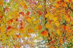 *** Herbstliches Farbrauschen ***