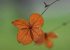 Herbstliches Gegenlicht