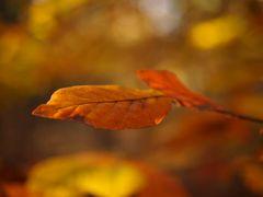 Herbstliches III