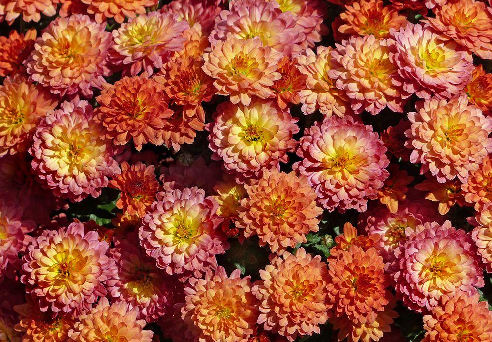 Herbstliches Mittwochsblümchen