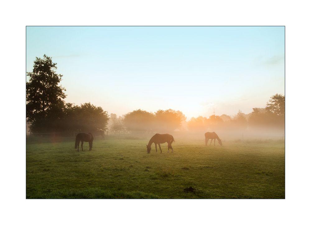 < herbstliches Morgenlicht >
