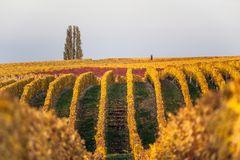 Herbstliches Naheland