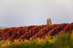 Herbstliches Naheland V