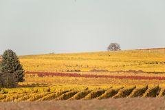 Herbstliches Naheland VI