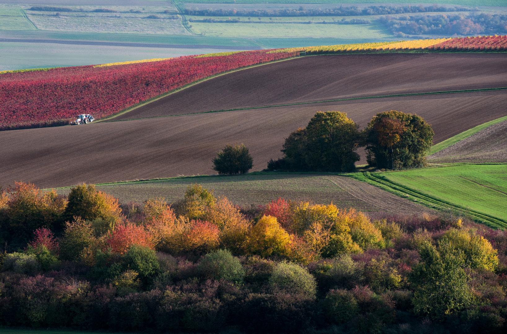 Herbstliches Rheinhessen - II -