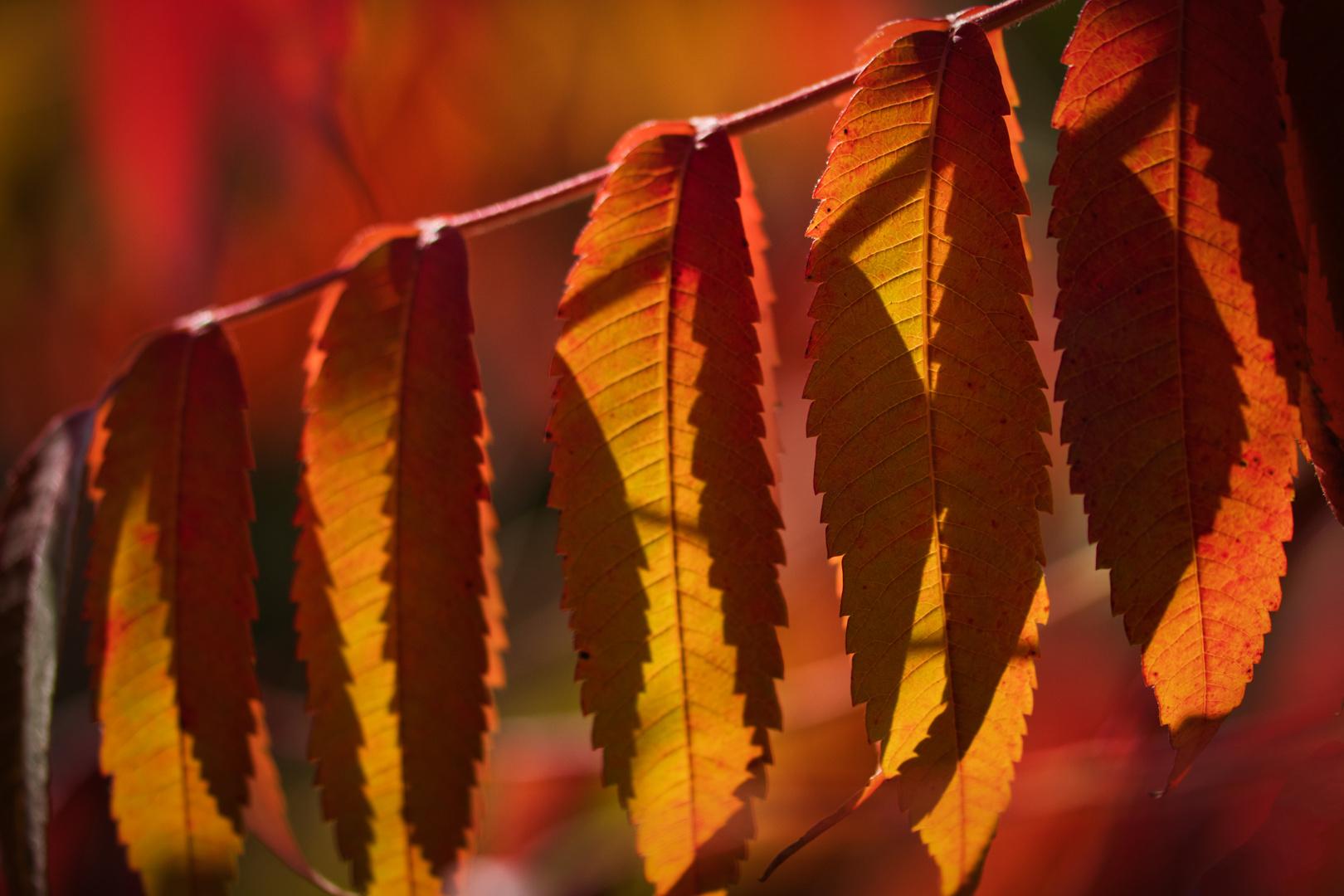 Herbstliches Schattenspiel