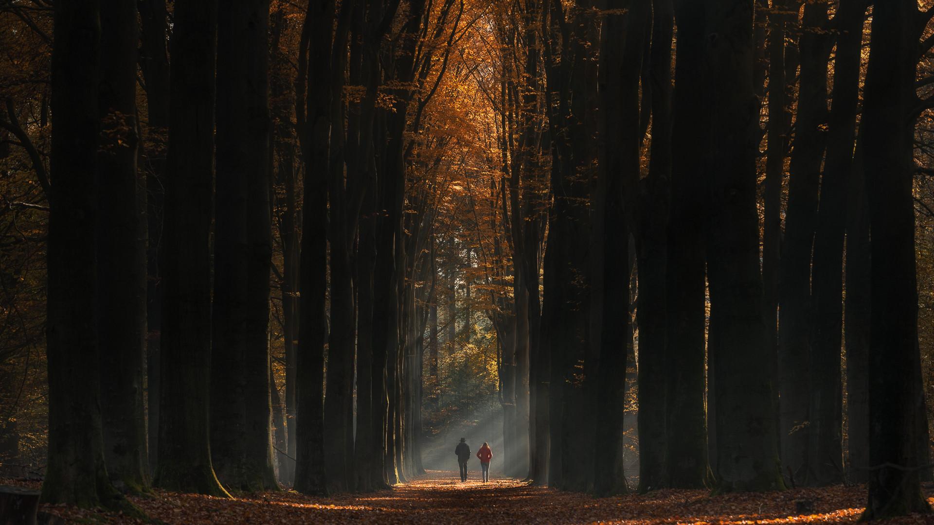 Herbstliches Seitenlicht