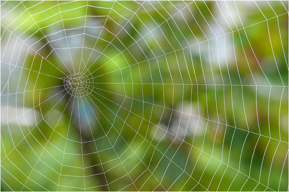 """""""herbstliches Spinnennetz"""""""