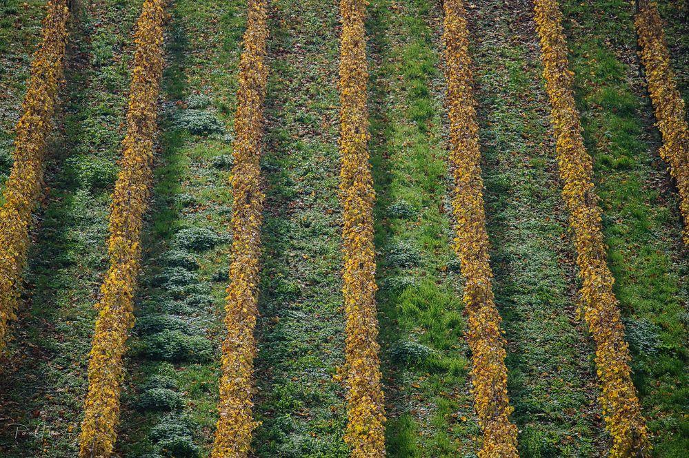 Herbstliches Streifenmuster