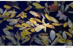 Herbstliches TreibGut...
