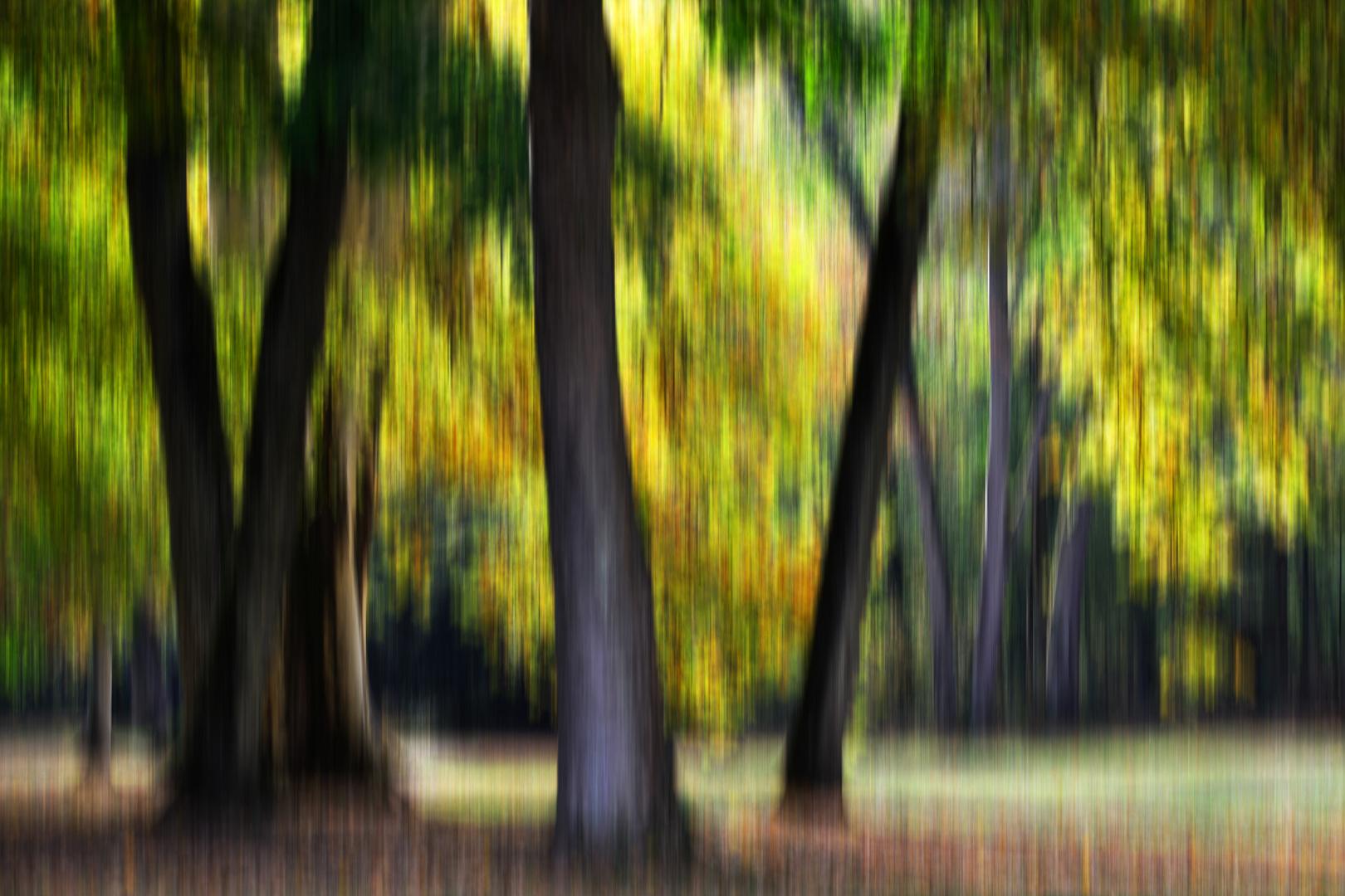Herbstlicht # 0106