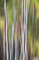 Herbstlicht # 0160-0130_HDR2