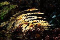 Herbstlicht # 0182