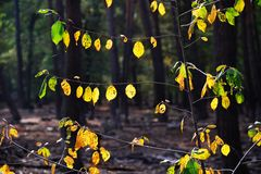 Herbstlicht # 0203