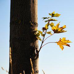 Herbstlicht #0568 KDL Kopie