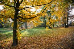 ... Herbstlicht ...