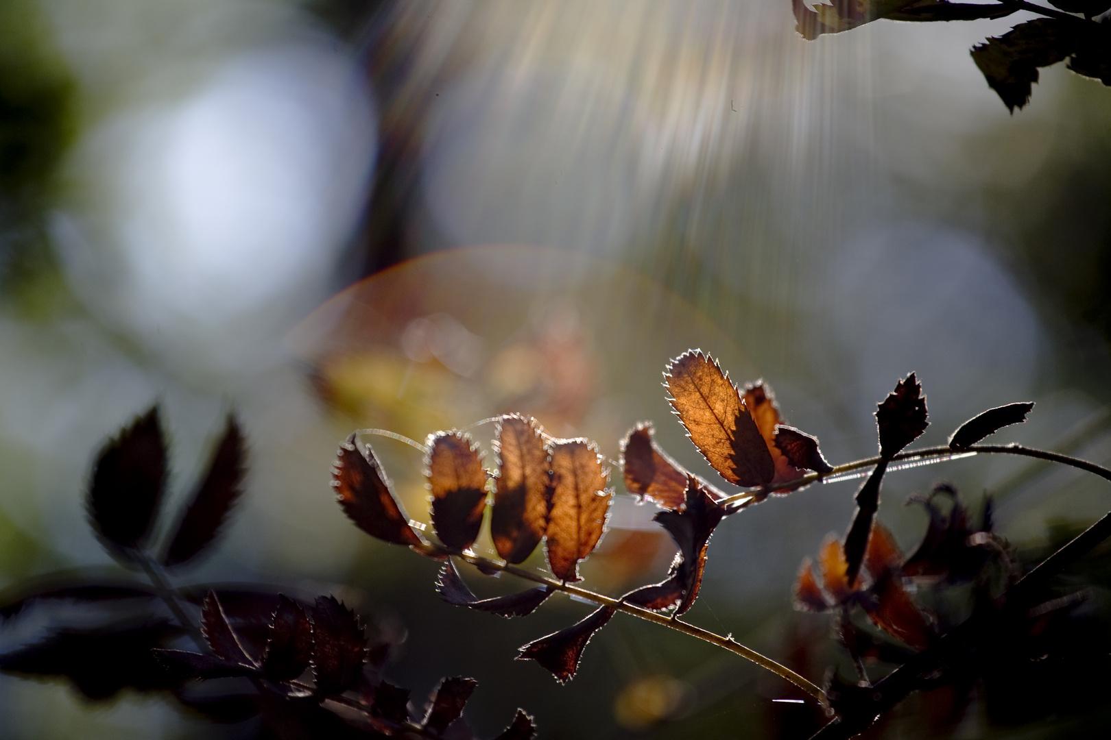 Herbstlicht 1