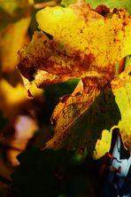 Herbstlich(t)......