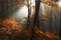 Herbstlicht 2