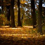 Herbstlich(t) 2