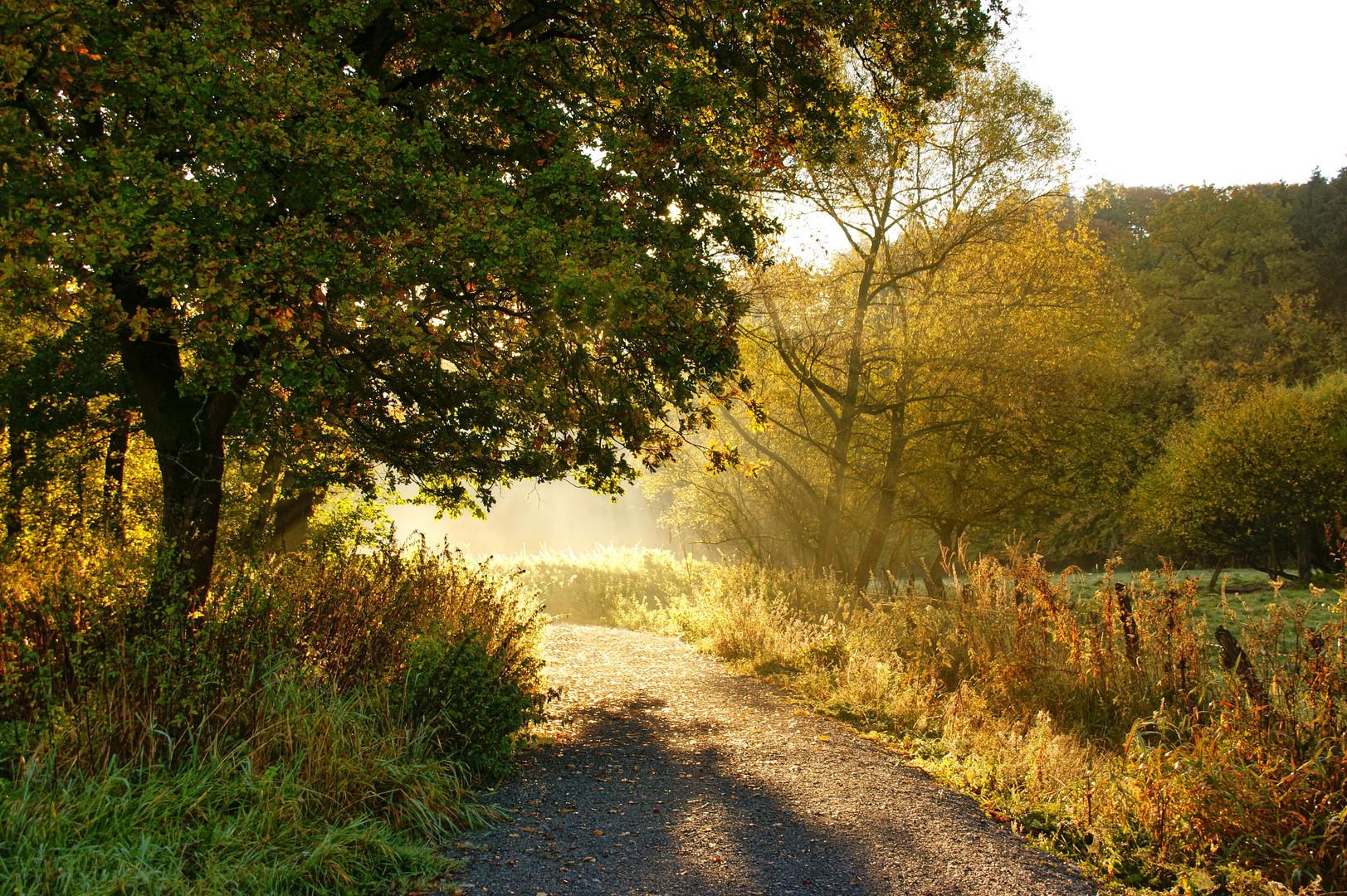 Herbstlicht........!