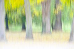 Herbstlicht # 3550 Kopie 5