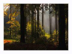 Herbstlicht ...4