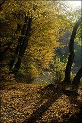[ Herbstlicht ]