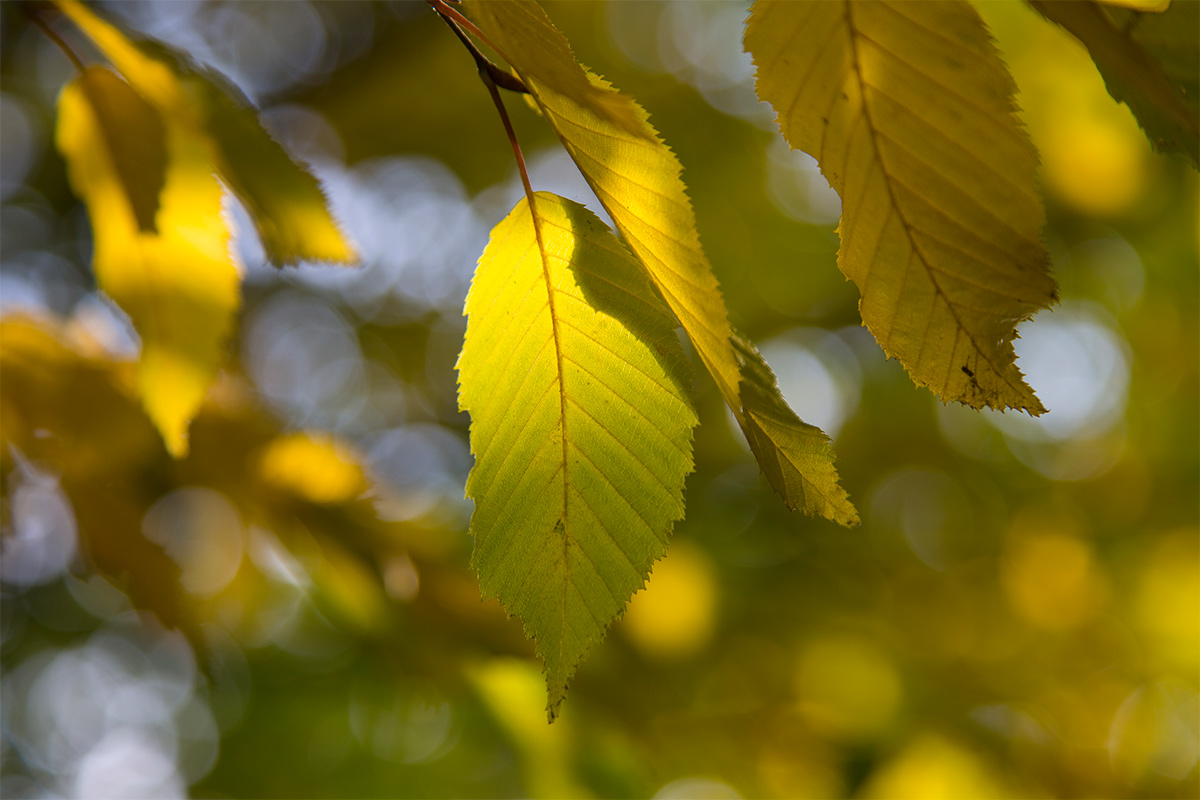 < Herbstlicht >